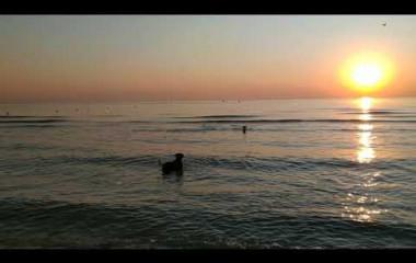 I cani nella spiaggia di Rimini